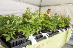 Asociación Plantamos Árboles en la Feria del Libro de Madrid